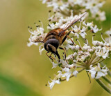 The Fly by biffobear, photography->insects/spiders gallery