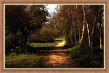 Walcheren Country Roads & Paths 03 by corngrowth, Photography->Landscape gallery