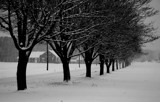 maple trees in a snowstorm by solita17, Photography->Landscape gallery