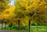 Rural Fall by corngrowth, photography->landscape gallery