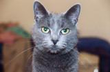 Maxine by bluegiraffe_8, photography->pets gallery