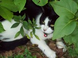 King of My Own Jungle by foxykidd2002, Photography->Pets gallery