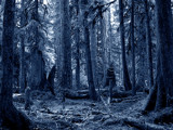 The Blue Forest by danger_of_death, Photography->Manipulation gallery