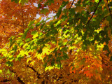 Shades of Fall by wheedance, Photography->Nature gallery