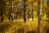 Colors of Fall in Lake Tahoe by demonzlady, Photography->Landscape gallery