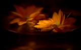 Orange water with flowers. by VeraVardig, Photography->Flowers gallery