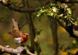 Ready by biffobear, photography->birds gallery
