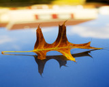 Autumn Leaf by LocusArt, photography->macro gallery