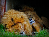 He ain't Heavy by biffobear, photography->animals gallery