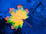 Neon leaf by ekowalska, photography->nature gallery