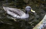 Morning Swim by Pistos, photography->birds gallery