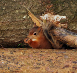 OK by biffobear, photography->animals gallery