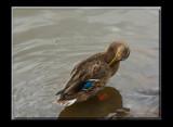 Pretty  Boy _ Second Posting by tigger3, Photography->Birds gallery