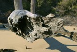 Drift Wood... by The1, Photography->Shorelines gallery