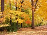 Lending Color by jojomercury, Photography->Landscape gallery