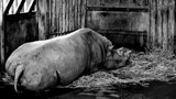 Sleeping Like A Baby by braces, contests->b/w challenge gallery