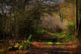 Woodland Path by biffobear, photography->landscape gallery
