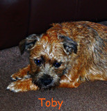 Toby by biffobear, photography->pets gallery