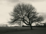 B&W Tree by pom1, Photography->Landscape gallery