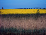 Zeeland Countryside (16), Mellow Yellow? by corngrowth, Photography->Landscape gallery