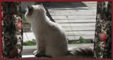 Oh Romeow, Romeow... by HylianPrincess1985, photography->pets gallery