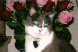 My Mocosa by claudiatx, photography->pets gallery