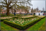Amsterdam Tulip Festival 06 by corngrowth, photography->city gallery