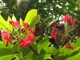 Hide and Seek by StarLite, Photography->Butterflies gallery