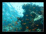Giant Goldfish Bowl by garyjampot, Photography->Underwater gallery