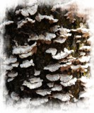 Bark Beauty by Starglow, photography->mushrooms gallery