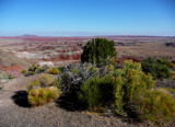 Return To The Petrified Forest /Painted Desert by marcaribe, photography->landscape gallery