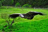gandalf 2 by biffobear, photography->birds gallery