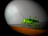 Mr. Green by brunello, Photography->Insects/Spiders gallery