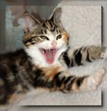Home Laughing by LynEve, photography->pets gallery