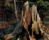 Broke Bark Mountain by mesmerized, photography->nature gallery
