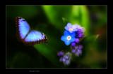 Blue Angel by kodo34, Photography->Manipulation gallery