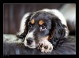 bo by kodo34, Photography->Pets gallery