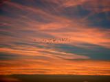 Sunrise Migration by wheedance, Photography->Birds gallery