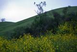 Calaveras 7 by jpk40, Photography->Landscape gallery