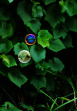 I'm Forever Blowing Bubbles by braces, photography->general gallery