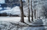 The Avenue... by biffobear, photography->landscape gallery