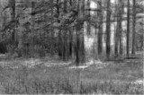 Sketchy Woods by bfrank, contests->b/w challenge gallery