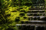 Late Afternoon on the Steps by gr8fulted, photography->gardens gallery