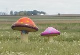 Glorified Mushrooms by Starglow, photography->sculpture gallery