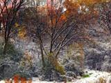 Snowy Halloween by trixxie17, photography->landscape gallery