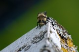 Bee by richwn, photography->insects/spiders gallery
