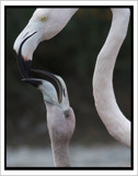 Hook and Ladder by garrettparkinson, Photography->Birds gallery