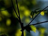 Senescence by stuffnstuff, Photography->Nature gallery