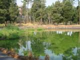 Bu�aquinho Park.6 by apofix, photography->nature gallery