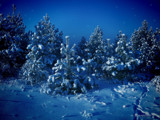 Siberian Winter by vladstudio, Holidays->Christmas gallery